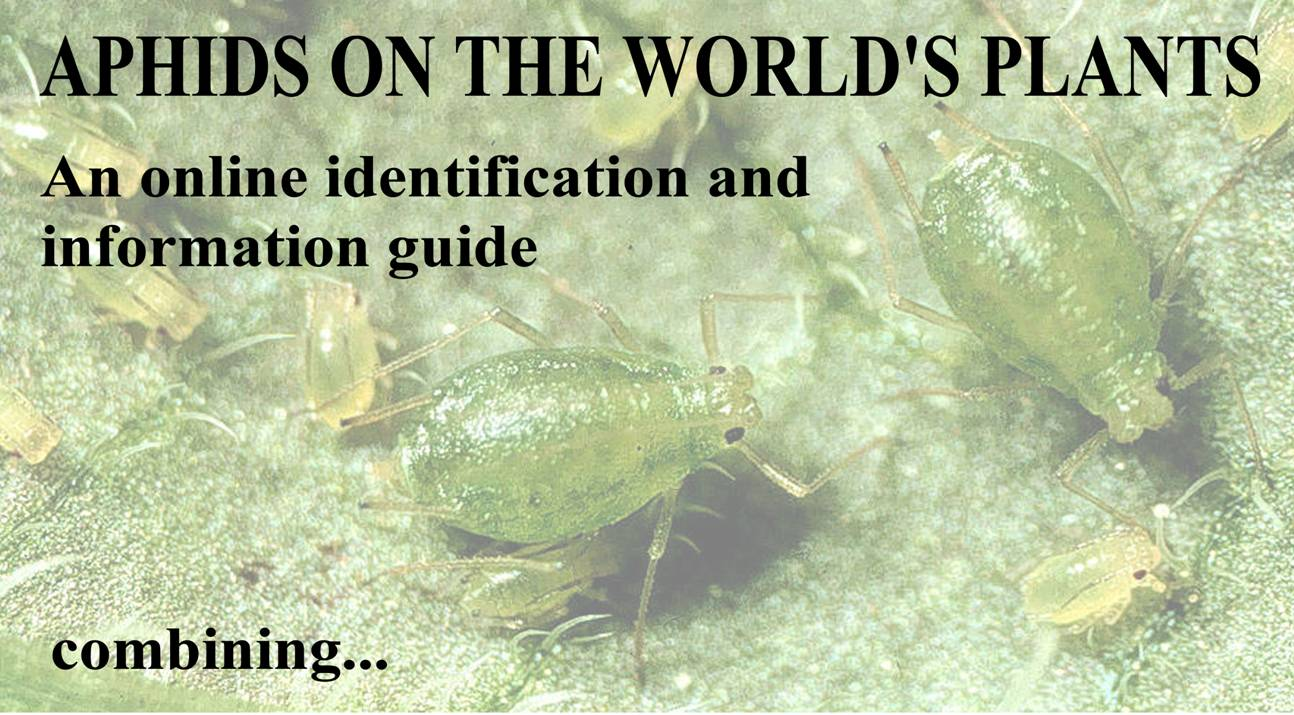 Aphids On The World S Plants